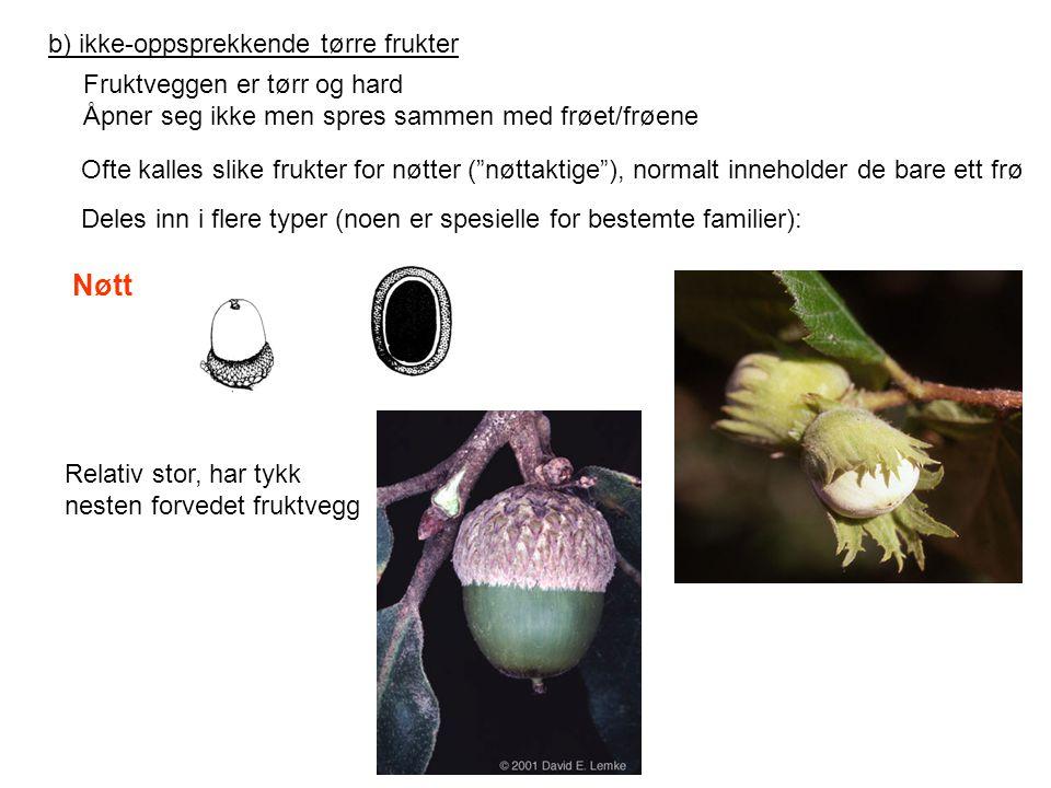 b) ikke-oppsprekkende tørre frukter Fruktveggen er tørr og hard Åpner seg ikke men spres sammen med frøet/frøene Ofte kalles slike frukter for nøtter