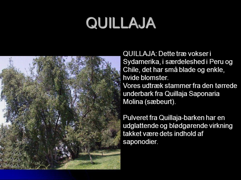 QUILLAJA QUILLAJA: Dette træ vokser i Sydamerika, i særdeleshed i Peru og Chile, det har små blade og enkle, hvide blomster. Vores udtræk stammer fra