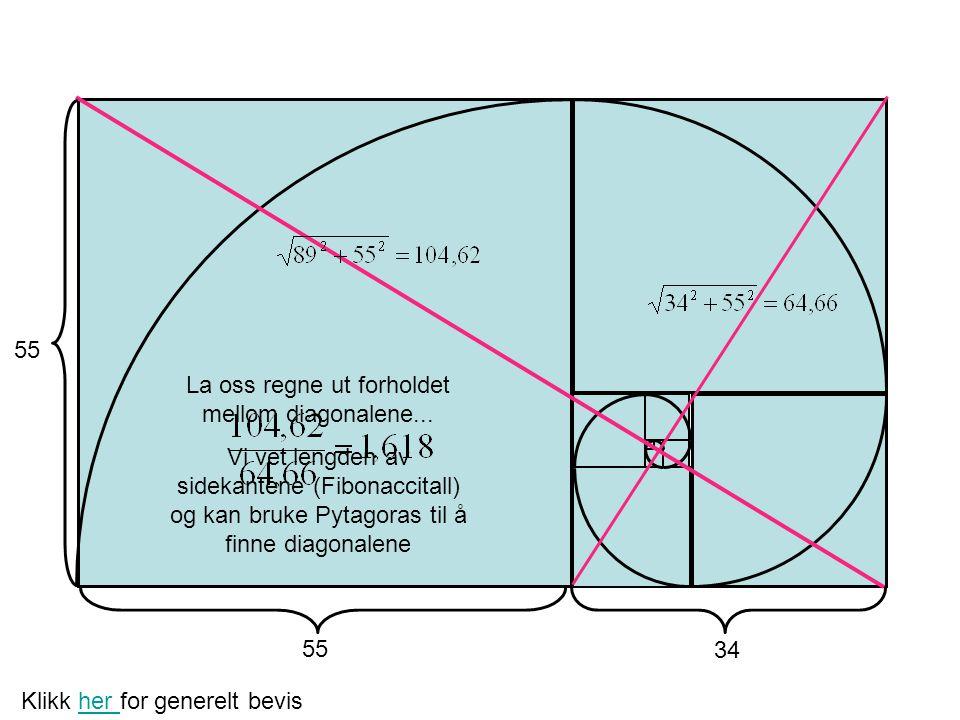 La oss regne ut forholdet mellom diagonalene... Vi vet lengden av sidekantene (Fibonaccitall) og kan bruke Pytagoras til å finne diagonalene 55 34 Kli