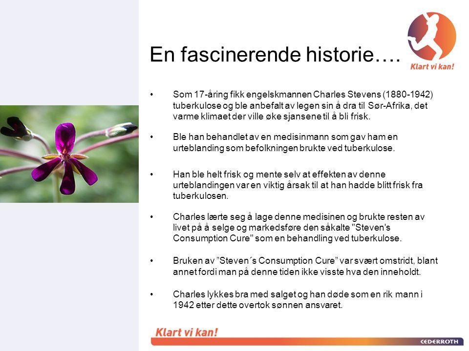 •På 1970-tallet klarte man ved hjelp av moderne analysemetoder å finne ut at planten var pelargonium Sidoides.