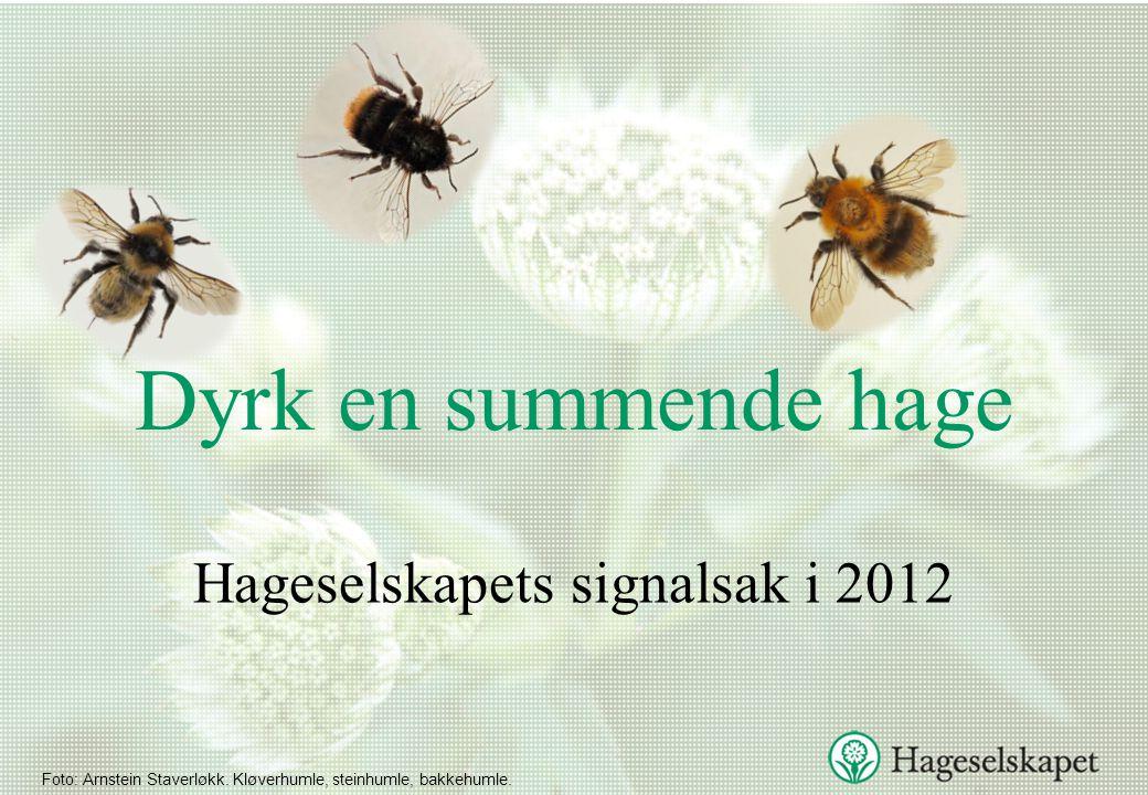Viste du at: •Noen arter kan fly med en hastighet på 15,7 km i timen.
