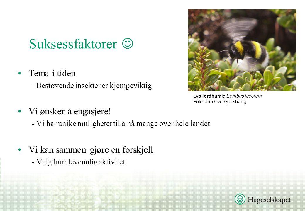 Suksessfaktorer  •Tema i tiden - Bestøvende insekter er kjempeviktig •Vi ønsker å engasjere.