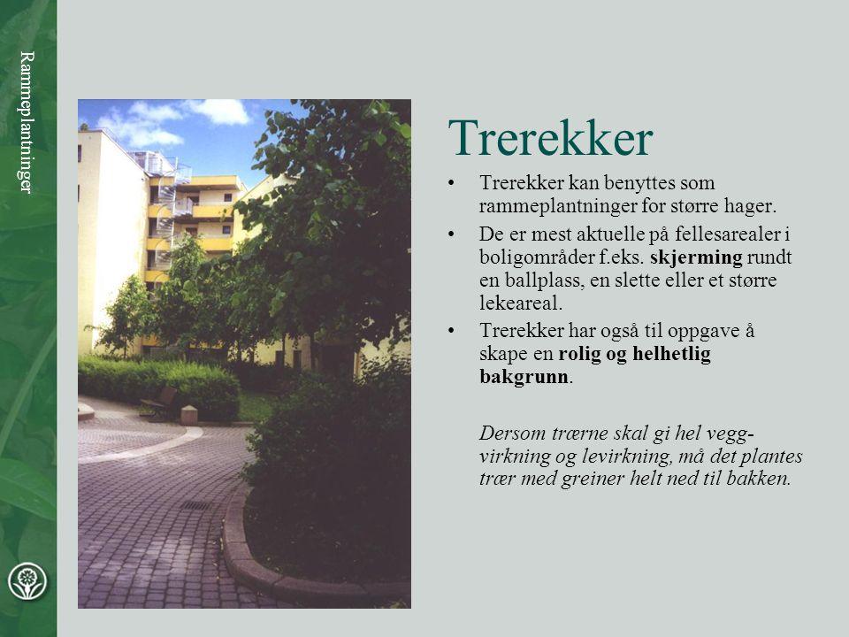 Trerekker •Trerekker kan benyttes som rammeplantninger for større hager. •De er mest aktuelle på fellesarealer i boligområder f.eks. skjerming rundt e