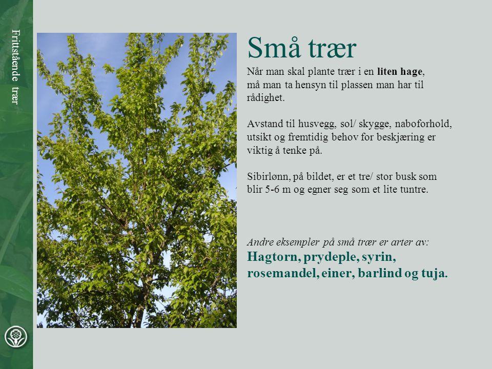 Små trær Når man skal plante trær i en liten hage, må man ta hensyn til plassen man har til rådighet. Avstand til husvegg, sol/ skygge, naboforhold, u