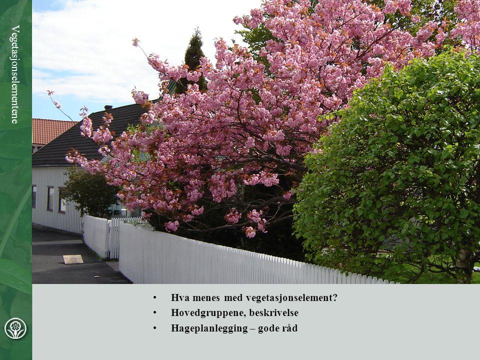 Vegetasjonselementene •Hva menes med vegetasjonselement? •Hovedgruppene, beskrivelse •Hageplanlegging – gode råd