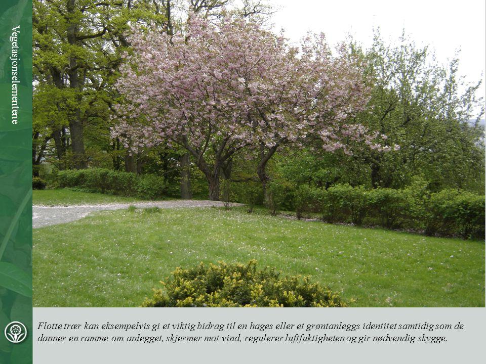 Flotte trær kan eksempelvis gi et viktig bidrag til en hages eller et grøntanleggs identitet samtidig som de danner en ramme om anlegget, skjermer mot vind, regulerer luftfuktigheten og gir nødvendig skygge.