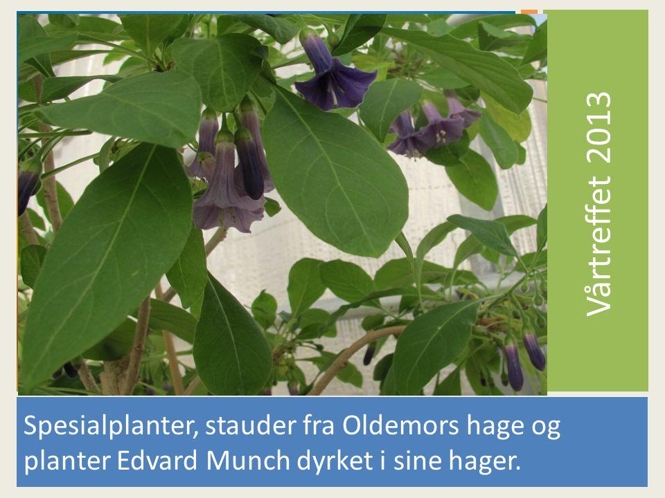 Vårtreffet 2013 Spesialplanter, stauder fra Oldemors hage og planter Edvard Munch dyrket i sine hager.