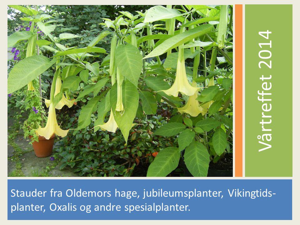 Vårtreffet 2014 Stauder fra Oldemors hage, jubileumsplanter, Vikingtids- planter, Oxalis og andre spesialplanter.