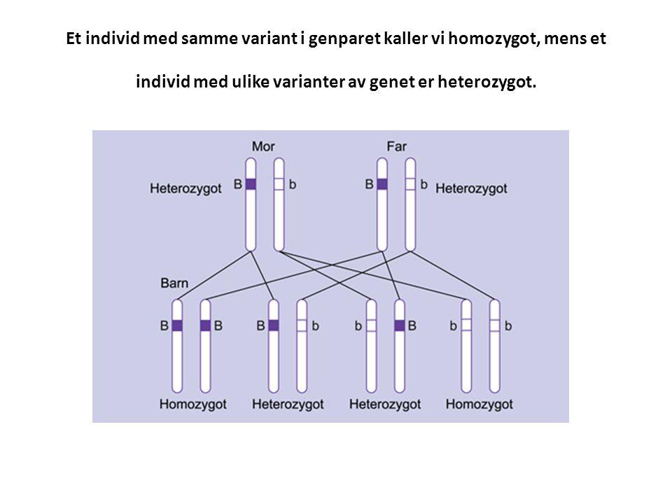 Et individ med samme variant i genparet kaller vi homozygot, mens et individ med ulike varianter av genet er heterozygot.