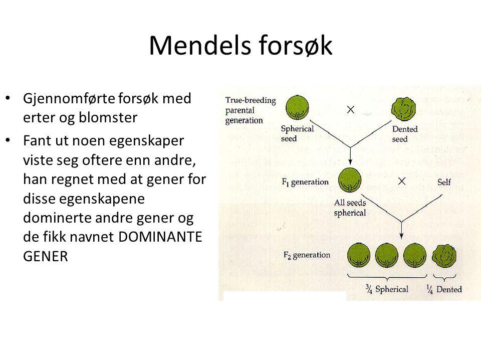 Mendels forsøk • Gjennomførte forsøk med erter og blomster • Fant ut noen egenskaper viste seg oftere enn andre, han regnet med at gener for disse ege
