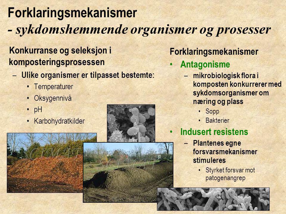 Mikroorganismer i hagekompost Elektronmikdoskopbilder, Foto: Scimat