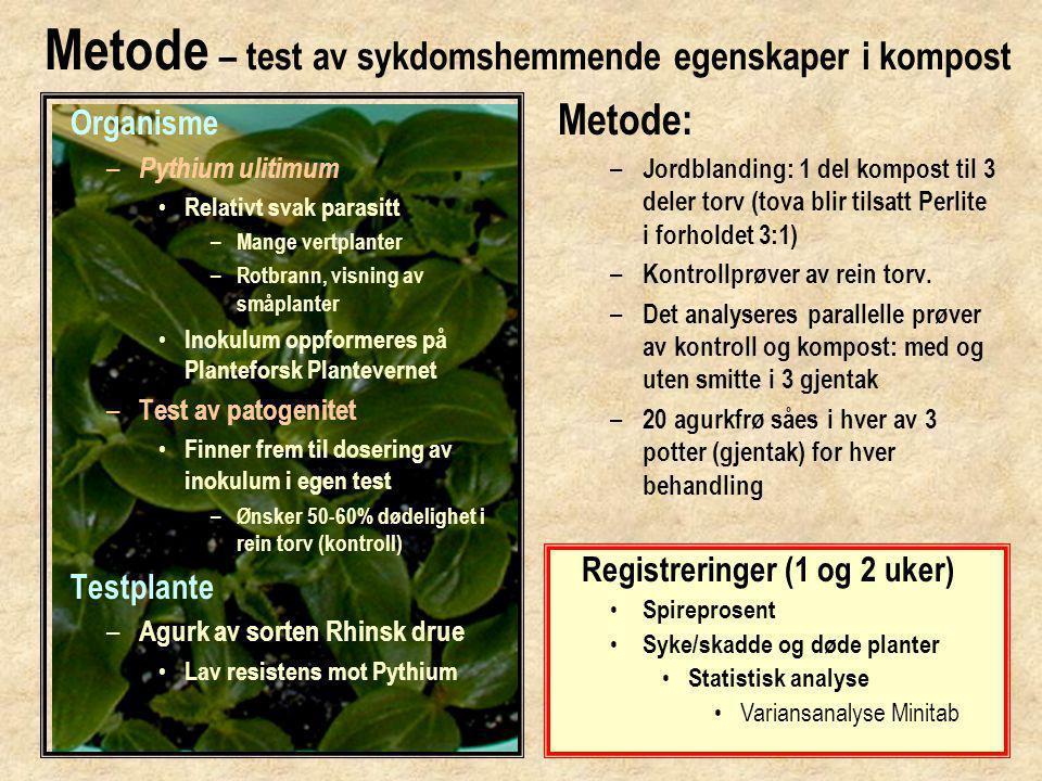 Metode – test av sykdomshemmende egenskaper i kompost Organisme – Pythium ulitimum • Relativt svak parasitt – Mange vertplanter – Rotbrann, visning av småplanter • Inokulum oppformeres på Planteforsk Plantevernet – Test av patogenitet • Finner frem til dosering av inokulum i egen test – Ønsker 50-60% dødelighet i rein torv (kontroll) Testplante – Agurk av sorten Rhinsk drue • Lav resistens mot Pythium Metode: – Jordblanding: 1 del kompost til 3 deler torv (tova blir tilsatt Perlite i forholdet 3:1) – Kontrollprøver av rein torv.