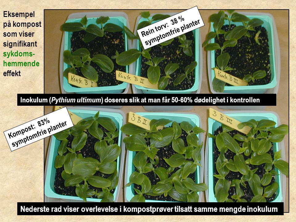 Eksempel på kompost som ikke viser tegn til sykdoms- hemmende egenskaper
