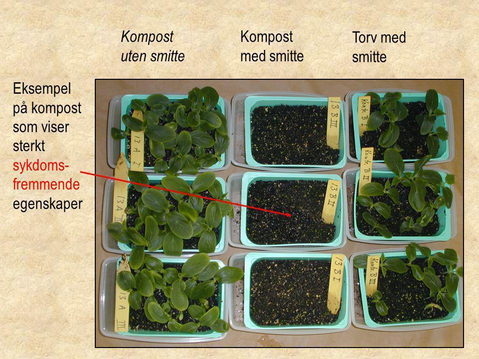 Kompost uten smitte Torv med smitte Kompost med smitte Eksempel på kompost som viser sterkt sykdoms- fremmende egenskaper