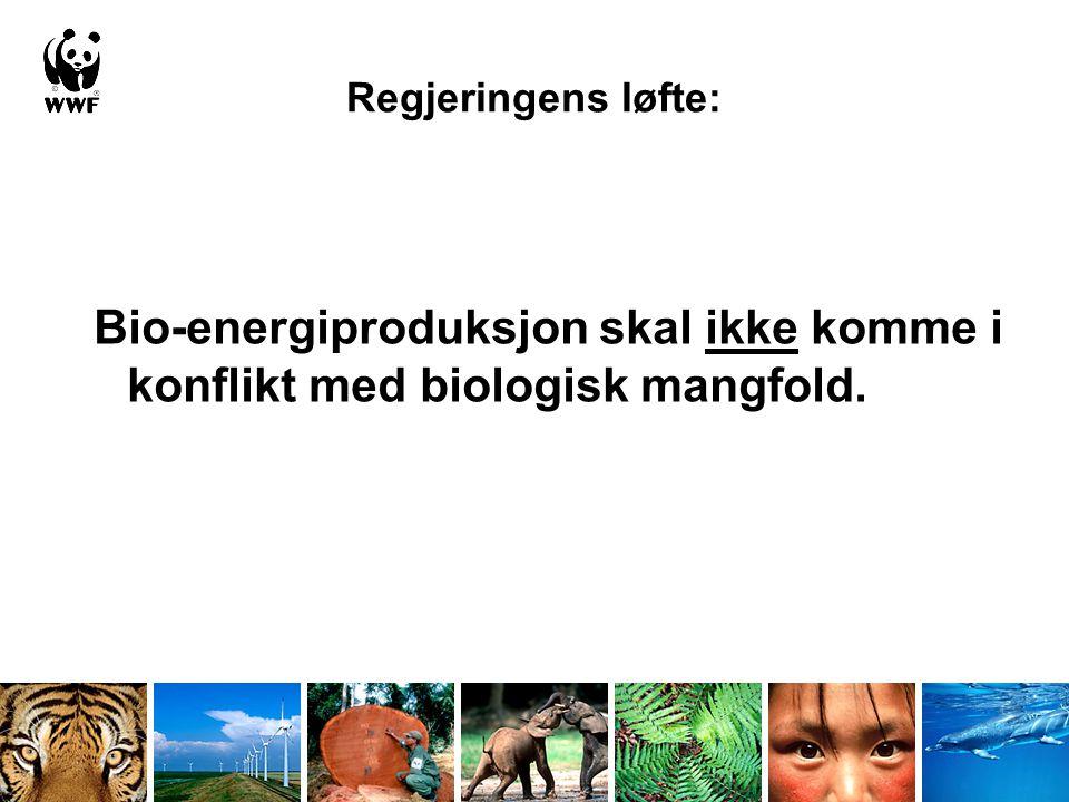 Regjeringens løfte: Bio-energiproduksjon skal ikke komme i konflikt med biologisk mangfold.