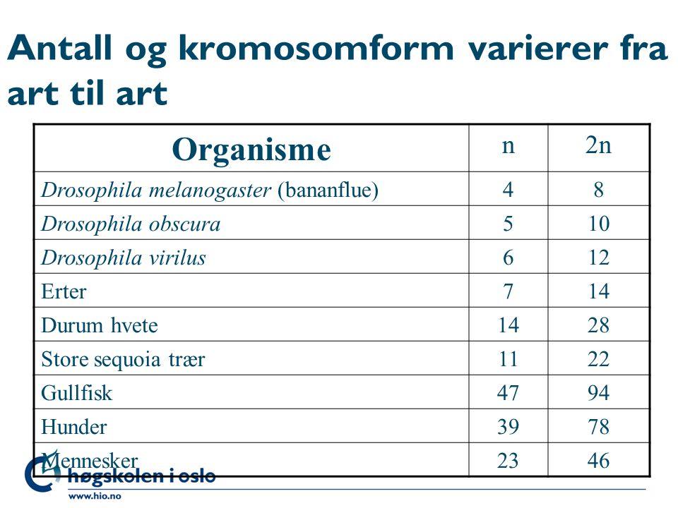 Antall og kromosomform varierer fra art til art Organisme n2n Drosophila melanogaster (bananflue)48 Drosophila obscura510 Drosophila virilus612 Erter714 Durum hvete1428 Store sequoia trær1122 Gullfisk4794 Hunder3978 Mennesker2346