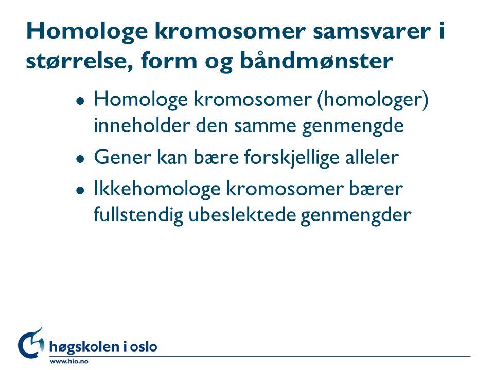 Homologe kromosomer samsvarer i størrelse, form og båndmønster l Homologe kromosomer (homologer) inneholder den samme genmengde l Gener kan bære forskjellige alleler l Ikkehomologe kromosomer bærer fullstendig ubeslektede genmengder