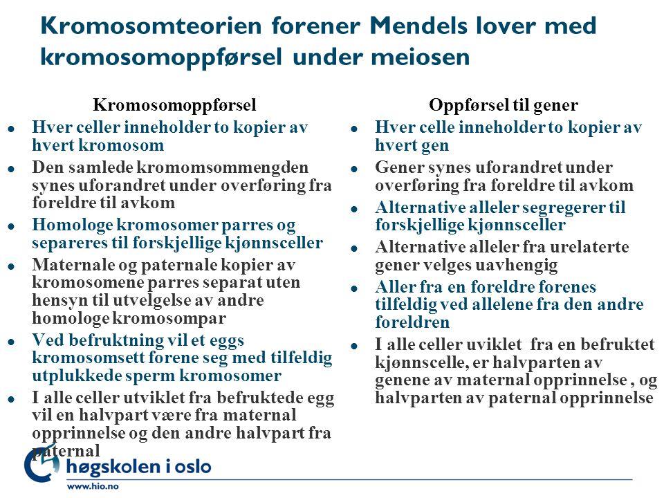 Kromosomteorien forener Mendels lover med kromosomoppførsel under meiosen Kromosomoppførsel l Hver celler inneholder to kopier av hvert kromosom l Den samlede kromomsommengden synes uforandret under overføring fra foreldre til avkom l Homologe kromosomer parres og separeres til forskjellige kjønnsceller l Maternale og paternale kopier av kromosomene parres separat uten hensyn til utvelgelse av andre homologe kromosompar l Ved befruktning vil et eggs kromosomsett forene seg med tilfeldig utplukkede sperm kromosomer l I alle celler utviklet fra befruktede egg vil en halvpart være fra maternal opprinnelse og den andre halvpart fra paternal Oppførsel til gener l Hver celle inneholder to kopier av hvert gen l Gener synes uforandret under overføring fra foreldre til avkom l Alternative alleler segregerer til forskjellige kjønnsceller l Alternative alleler fra urelaterte gener velges uavhengig l Aller fra en foreldre forenes tilfeldig ved allelene fra den andre foreldren l I alle celler uviklet fra en befruktet kjønnscelle, er halvparten av genene av maternal opprinnelse, og halvparten av paternal opprinnelse