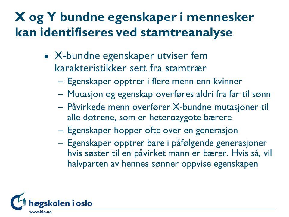 X og Y bundne egenskaper i mennesker kan identifiseres ved stamtreanalyse l X-bundne egenskaper utviser fem karakteristikker sett fra stamtrær –Egenskaper opptrer i flere menn enn kvinner –Mutasjon og egenskap overføres aldri fra far til sønn –Påvirkede menn overfører X-bundne mutasjoner til alle døtrene, som er heterozygote bærere –Egenskaper hopper ofte over en generasjon –Egenskaper opptrer bare i påfølgende generasjoner hvis søster til en påvirket mann er bærer.