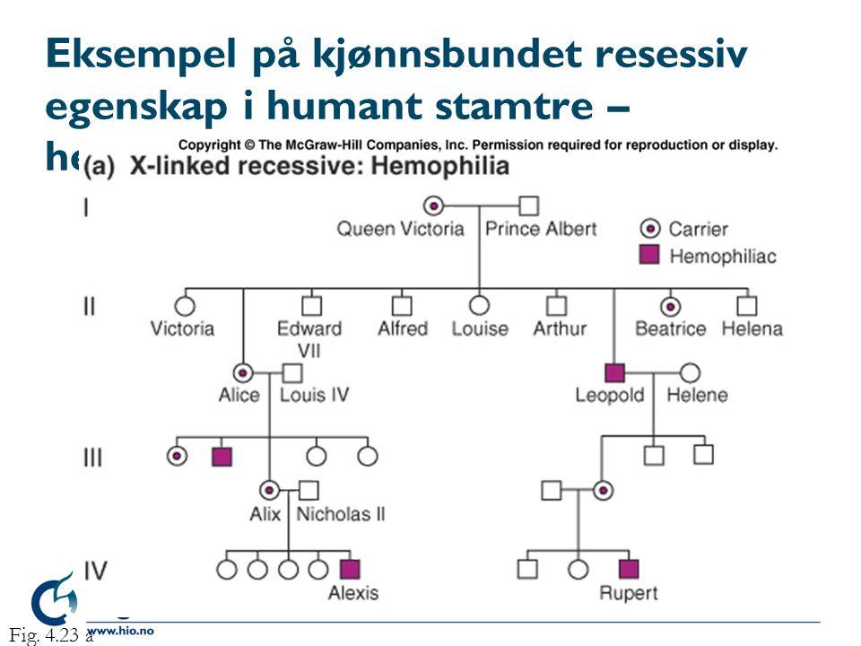 Eksempel på kjønnsbundet resessiv egenskap i humant stamtre – hemophilia Fig. 4.23 a