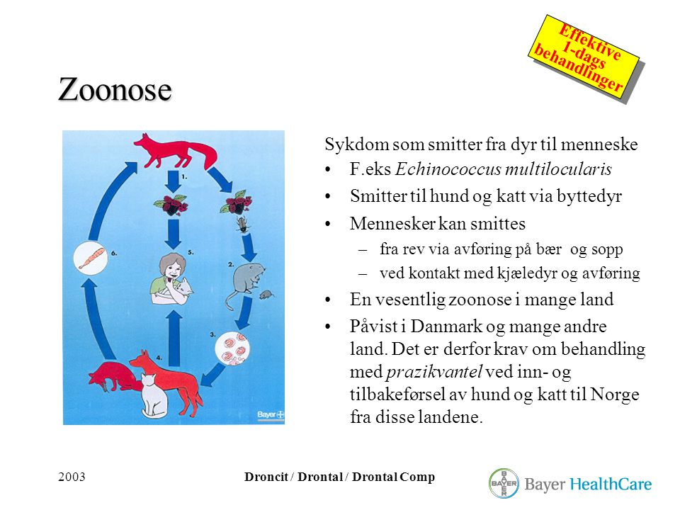 2003Droncit / Drontal / Drontal Comp Effektive 1-dags behandlinger Effektive 1-dags behandlinger Zoonose Sykdom som smitter fra dyr til menneske •F.ek