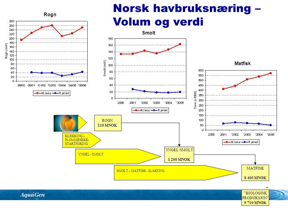 KLEKKING – PLOMMESEKK- STARTFORING YNGEL - SMOLT SMOLT – MATFISK - SLAKTING Rogn levering AVLSARBEID 35 MNOK ROGN 75 MNOK YNGEL/SMOLT 1 200 MNOK MATFISK 8 400 MNOK BIOLOGISK PRODUKSJON 9 710 MNOK Avlsarbeidets betydning for verdiskapingen i havbruksnæringa?.