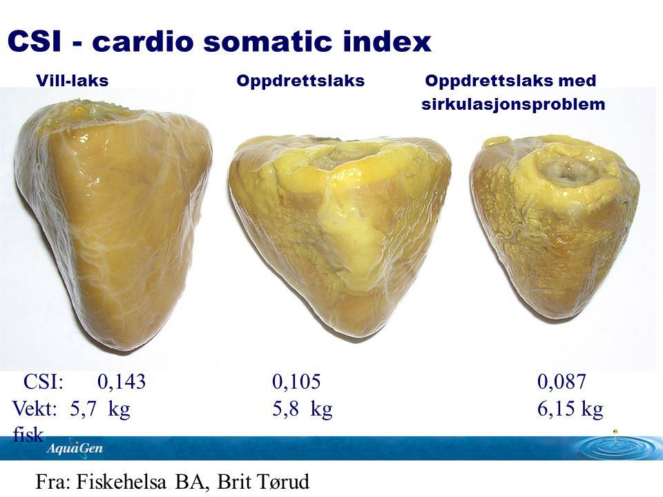 CSI: 0,143 0,105 0,087 Vekt: 5,7 kg 5,8 kg 6,15 kg fisk CSI - cardio somatic index Vill-laks Oppdrettslaks Oppdrettslaks med sirkulasjonsproblem Fra: