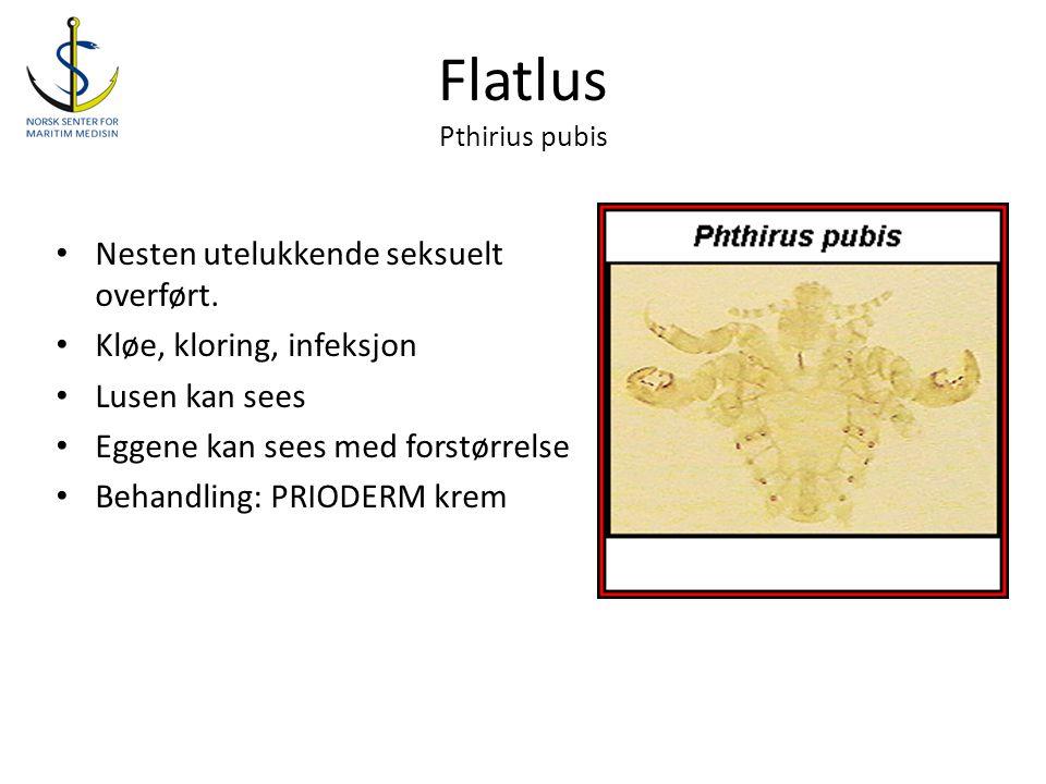 Flatlus Pthirius pubis • Nesten utelukkende seksuelt overført. • Kløe, kloring, infeksjon • Lusen kan sees • Eggene kan sees med forstørrelse • Behand