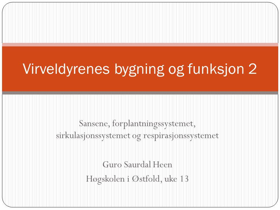 Sansene, forplantningssystemet, sirkulasjonssystemet og respirasjonssystemet Guro Saurdal Heen Høgskolen i Østfold, uke 13 Virveldyrenes bygning og fu
