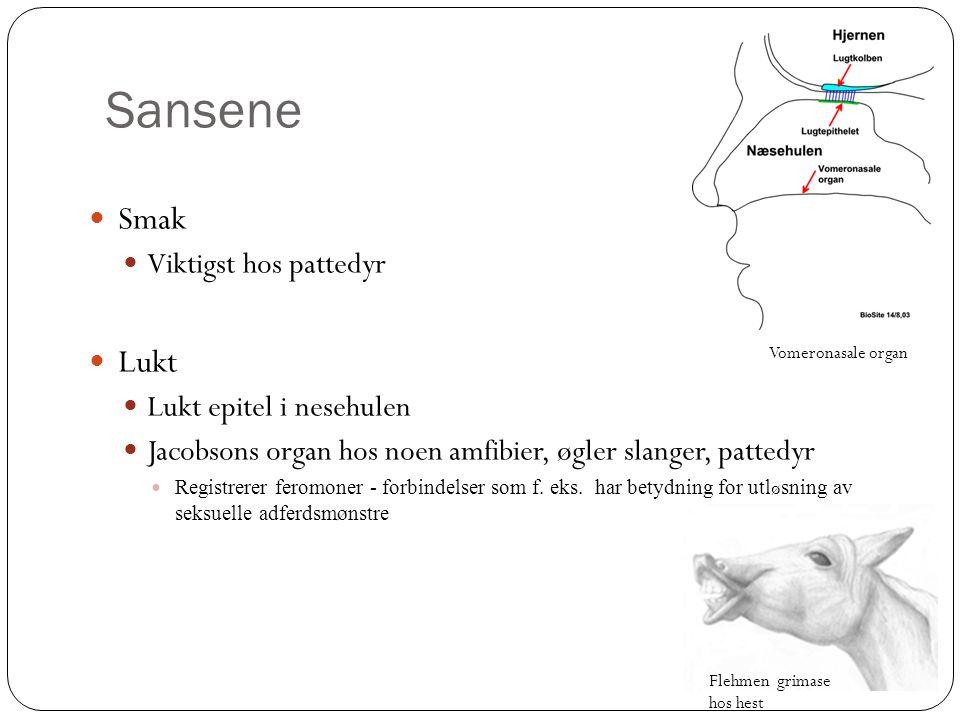 Sansene  Smak  Viktigst hos pattedyr  Lukt  Lukt epitel i nesehulen  Jacobsons organ hos noen amfibier, øgler slanger, pattedyr  Registrerer fer