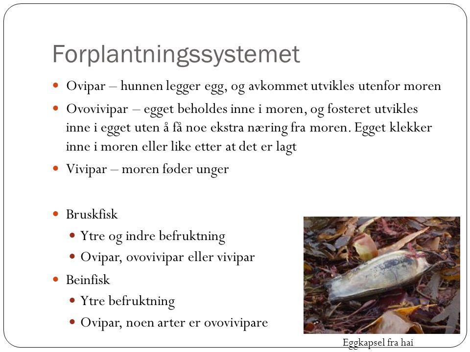 Forplantningssystemet  Ovipar – hunnen legger egg, og avkommet utvikles utenfor moren  Ovovivipar – egget beholdes inne i moren, og fosteret utvikle
