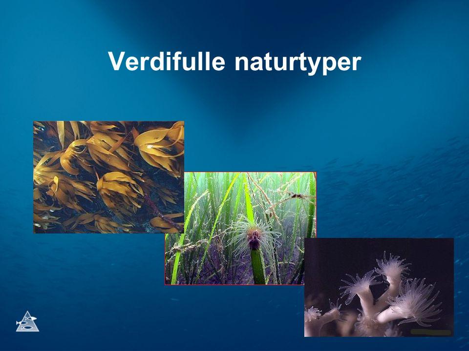 Verdifulle naturtyper