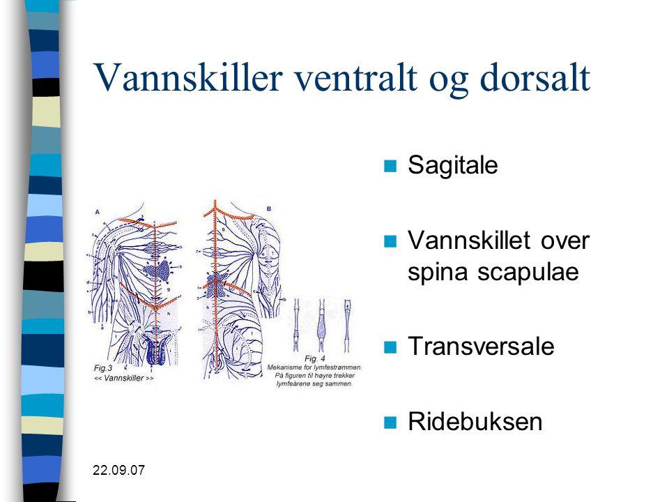 22.09.07 Vannskiller ventralt og dorsalt  Sagitale  Vannskillet over spina scapulae  Transversale  Ridebuksen