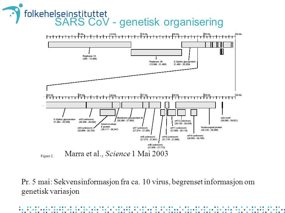 SARS CoV - genetisk organisering Marra et al., Science 1 Mai 2003 Pr. 5 mai: Sekvensinformasjon fra ca. 10 virus, begrenset informasjon om genetisk va