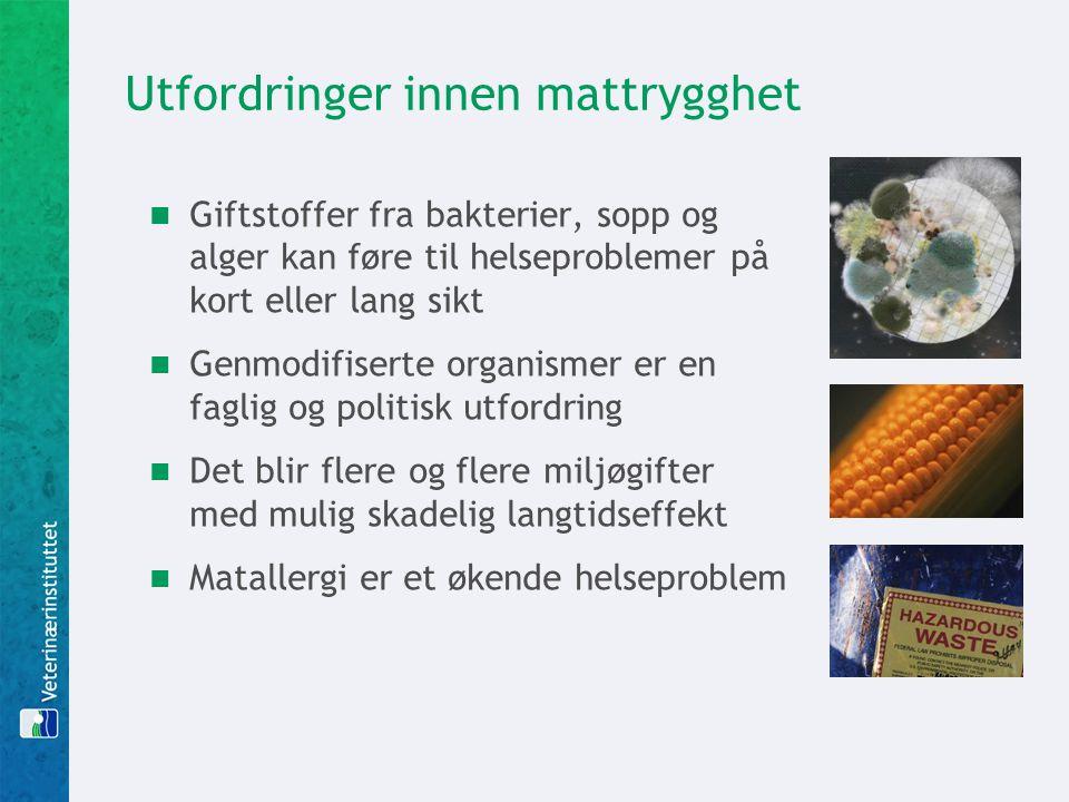 Utfordringer innen mattrygghet  Giftstoffer fra bakterier, sopp og alger kan føre til helseproblemer på kort eller lang sikt  Genmodifiserte organismer er en faglig og politisk utfordring  Det blir flere og flere miljøgifter med mulig skadelig langtidseffekt  Matallergi er et økende helseproblem