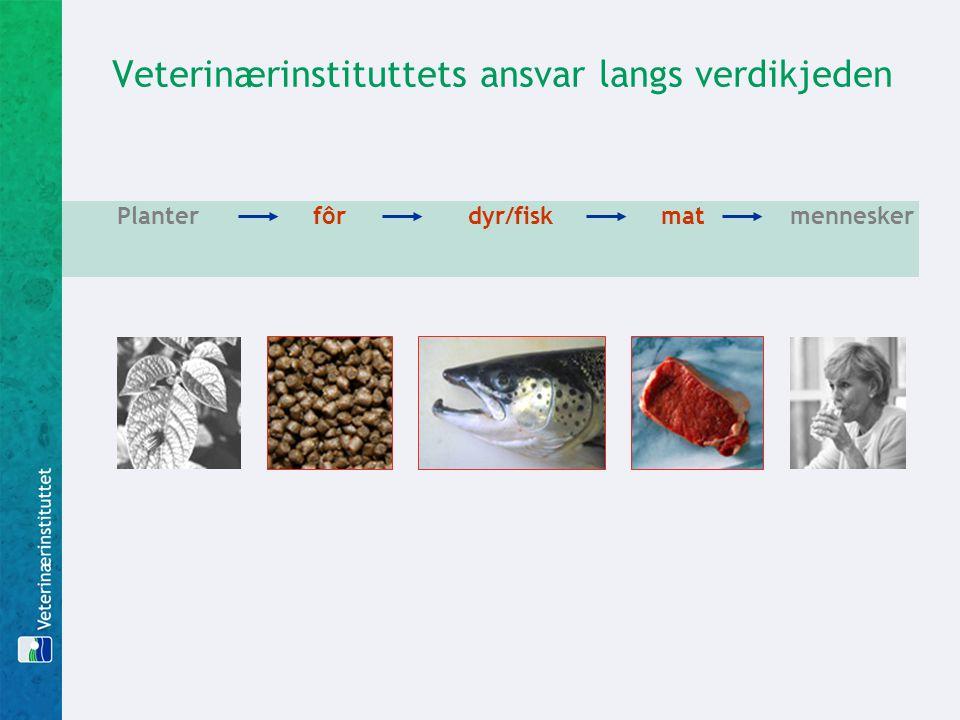 Veterinærinstituttets ansvar langs verdikjeden Planter fôr dyr/fisk mat mennesker
