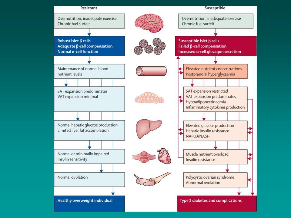 Alfa- og betacelledysfunksjon og insulinresistens - avgjørende for utviklingen av type-2 diabetes Tilpasset fra Del Prato et al.