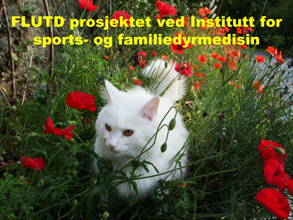 Randi Krontveit, Norges veterinærhøgskole FLUTD prosjektet ved Institutt for sports- og familiedyrmedisin