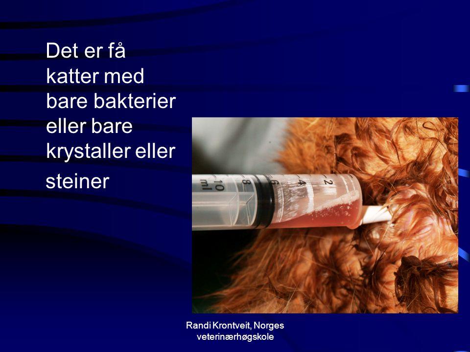 Randi Krontveit, Norges veterinærhøgskole Det er få katter med bare bakterier eller bare krystaller eller steiner