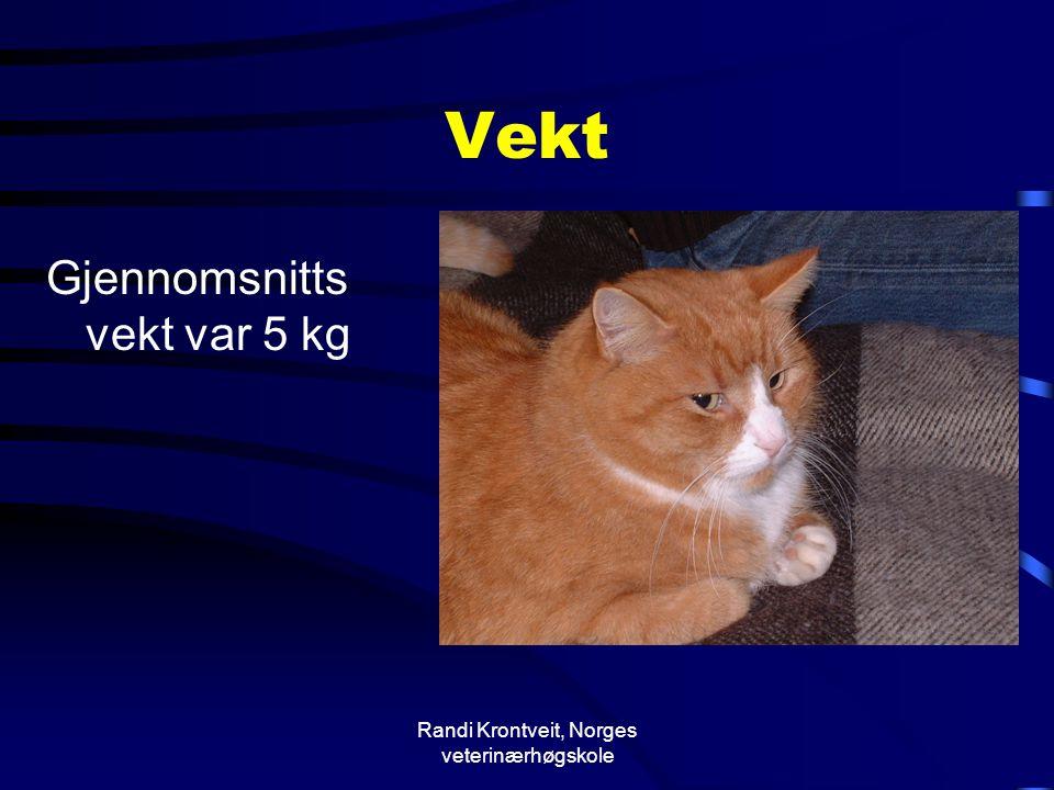 Randi Krontveit, Norges veterinærhøgskole Vekt Gjennomsnitts vekt var 5 kg