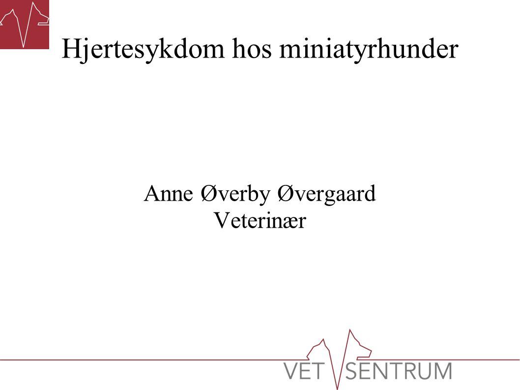 Hjertesykdom hos miniatyrhunder Anne Øverby Øvergaard Veterinær