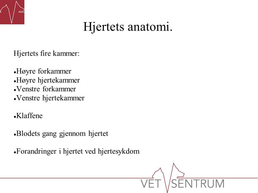 Hjertets anatomi.