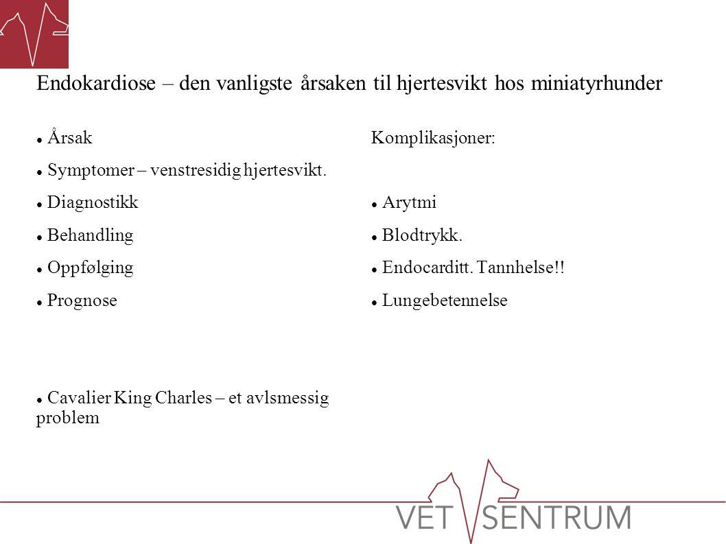 Endokardiose