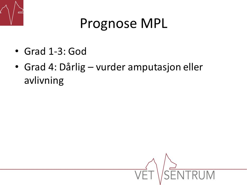 Prognose MPL • Grad 1-3: God • Grad 4: Dårlig – vurder amputasjon eller avlivning