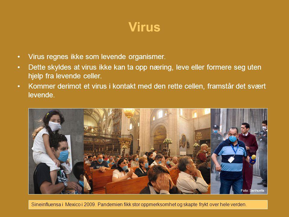 Virus •Virus regnes ikke som levende organismer.