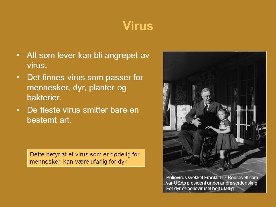 Virus •Det er ikke lett å fjerne et virus fra kroppen.