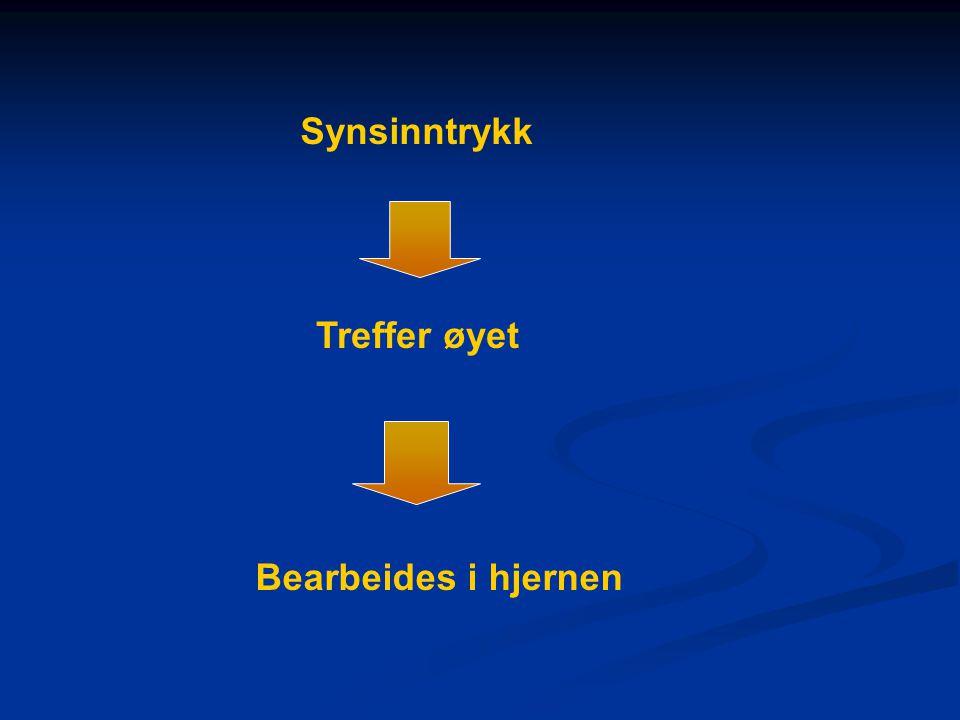 Synsinntrykk Treffer øyet Bearbeides i hjernen