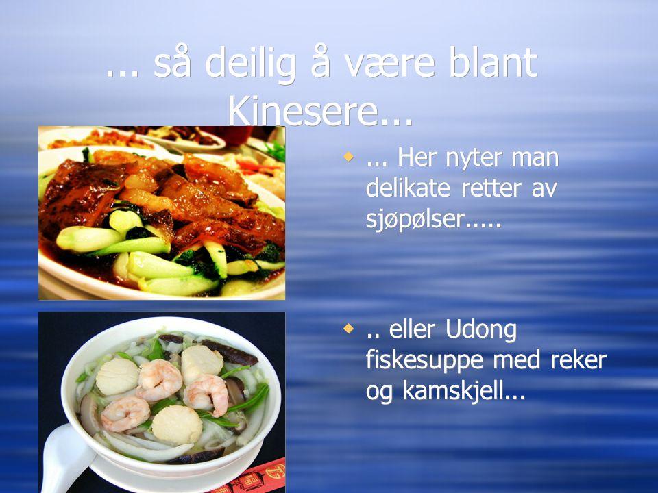 ... så deilig å være blant Kinesere... ... Her nyter man delikate retter av sjøpølser..... .. eller Udong fiskesuppe med reker og kamskjell...