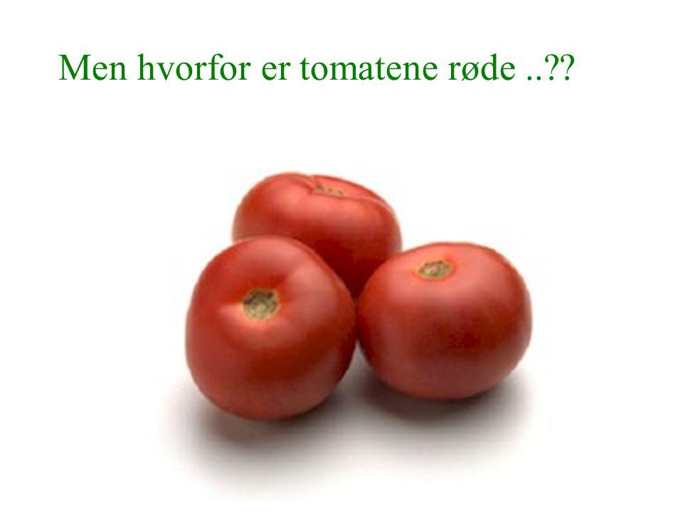 Men hvorfor er tomatene røde..??