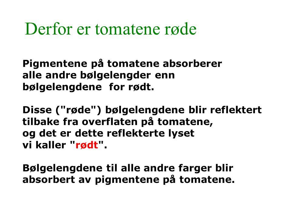 Derfor er tomatene røde Pigmentene på tomatene absorberer alle andre bølgelengder enn bølgelengdene for rødt. Disse (